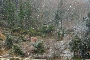 Tolfa e i suoi dolci boschi bianchi