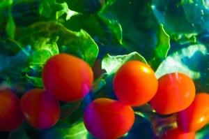 bietola-e-pomodorini